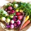 【かぶのレシピ】かぶのカクテキキムチ。無農薬のカラフルな根菜類がたくさん揃いました。