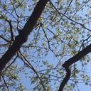 木と根っこ日記
