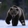 二十四節気七十二候 「大雪 熊蟄穴」(2017/12/12)