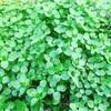 野草を食す(2)