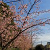 すっかり春