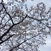 宮崎台 ふる里さくら祭りに行ってきました 今年で21回目の開催です