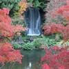 大阪、北摂地域最大の紅葉の名所 万博記念公園