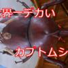 【ヘラクレスオオカブト!】バーツクチルドレンに大使が教えてもらった、虫大好きな少年のドリームランドへログイン!【昆虫館】