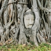 今日は朝からアユタヤに行ってきた。有名な木の根っこに挟まったブッダの顔を見てきた。