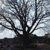 勝俣部長の「ため息」1823・・・・老人の お願い
