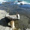 江の島散策②~台風被害の爪痕のこる「岩屋洞窟」探検!&江の島グルメを食べ歩き!!~
