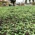 中野区立広町みらい公園開園1周年。または、天下の日比谷花壇も枯れ木に花は咲かせられない(2020年9月)(更新は10月)