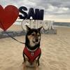 韓国で犬連れ車泊キャンプ③海鮮スンドゥブとサムチョクビーチ観光