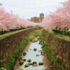 【2017年版】20年通い分かった 山崎川の桜・お花見総まとめ トイレの場所から開花情報まで