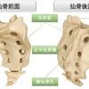 骨盤の構造〜仙骨〜