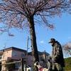 気がづけば桜が咲いていた。
