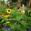 夏の花壇…暑さに強い花達🌻