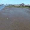 【動画】都会のゴミは干潟に流れつく