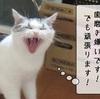 猫の病気 ~歯周病~
