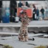 Macの壁紙をいい感じのお猫様写真にして、定期的に自動変更させる。