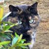 今日の景色 12/30 猫と花々