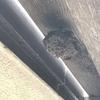 湖西市で台の下にできた蜂の巣を駆除してきました
