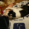 就寝前の取り組み ―入眠準備―