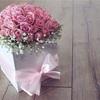 ピンクの薔薇の夢。