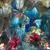 3月5日は「サンゴの日」~サンゴは何なの?(笑)(*´▽`*)~