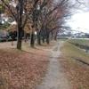 久しぶりに川沿いの道を散歩してきました