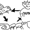 ヒアリの天敵コバエとその天敵(?)ニンゲンの3すくみ構造