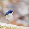 夏鳥のフルコース(軽井沢野鳥の森 2021/05/10~12)