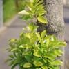 春よ来い。お散歩写真。XR RIKENON 50mm f2.0
