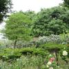 日本一長いバラの小径