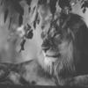 maneoの大量期失は王の終焉と新たな価値を創造する新時代の幕開けだった