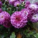 あをによし奈良の都にあこがれる青丹のblog