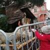 クリスマスマーケットで大量のツリー!?