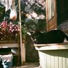黒猫こんぶのお家を作った。そして家猫決定!