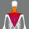 【頭痛・肩こり・首こり】筋トレで長年の悩みを解消なるか。検証開始!