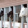ばんえい競馬の予想は当たる? 帯広競馬場と「とかちむら」の魅力紹介