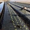 野菜の大産地のみなさんはよく働きます!