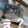【猫と話すアプリ】猫の言葉で会話しよう!人猫翻訳機がスゴい!