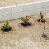 小さな苗木植栽~ 庭南側 ~