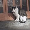 猫スポット 蔵前神社