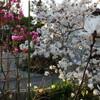 春 爛漫へ