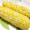 【はじめての畑】8月レポート!夏野菜総括っ!!