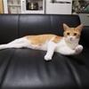 猫のガッツポーズ