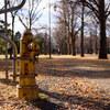 消火栓のある風景2