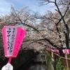 目黒川の桜〜花見 2017