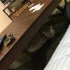 自宅で猫のトリミングができるらしい件