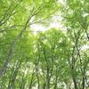 ◆'21/05/22 県立自然博物園・新緑の林の中を歩く②