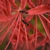 ❁上野公園にてマイクロレンズで花と昆虫を撮影しました🐛