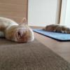 雨田甘夏、説得です。【猫と持ち家と譲れない事情】
