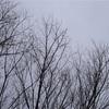 お散歩スナップ 竹の魅力を単焦点レンズで引き出す